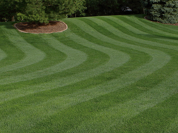 The Secret to Lawn Striping